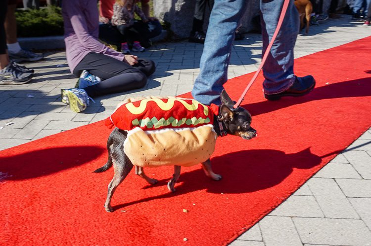 Hot dog looking hot on the red carpet.