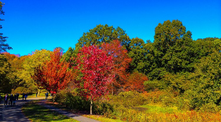 Thank you, stunning New England fall colors!