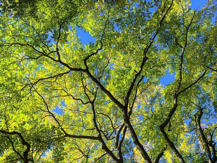Onward and upward like the sun-golden trees!