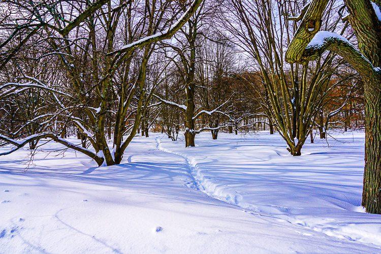 Boston's snow looking beautiful in the Arnold Arboretum.