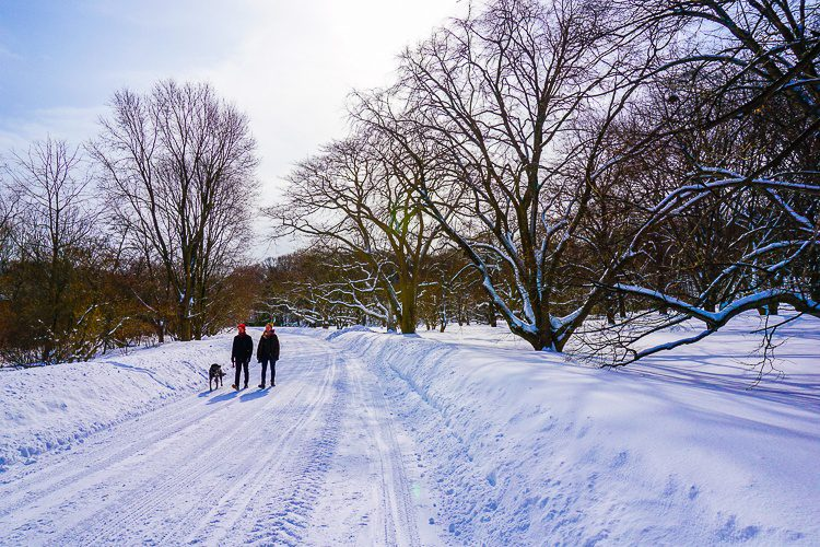 Thank goodness this path in the Arboretum was plowed.
