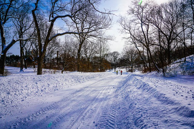 These people are cross-country skiing in the Arboretum!
