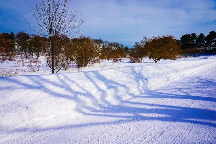 The tree shadows starkly show the height of the snowbanks.