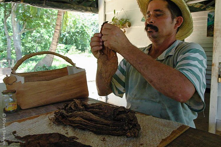 A demonstration of turning tobacco leaves into cigars: a main industry of Viñales.