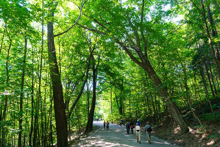 Parc du Mont-Royal will give your family many happy hours.