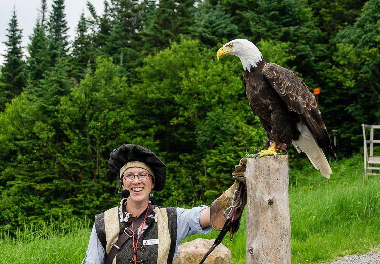That eagle sure is regal.