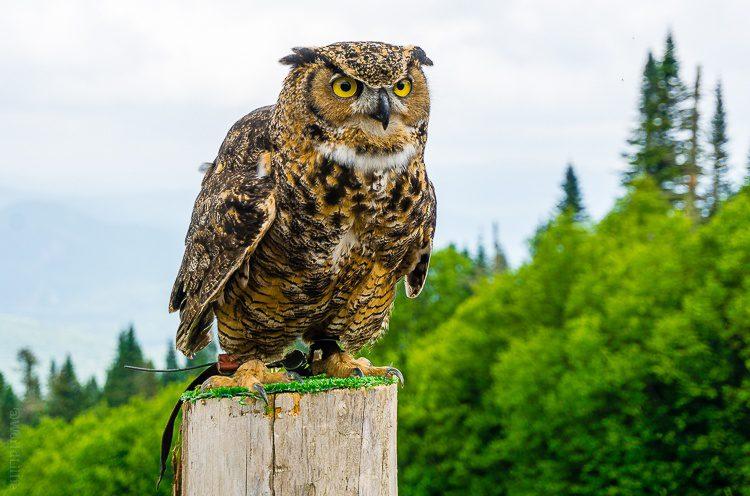 The owl in a calmer mood.