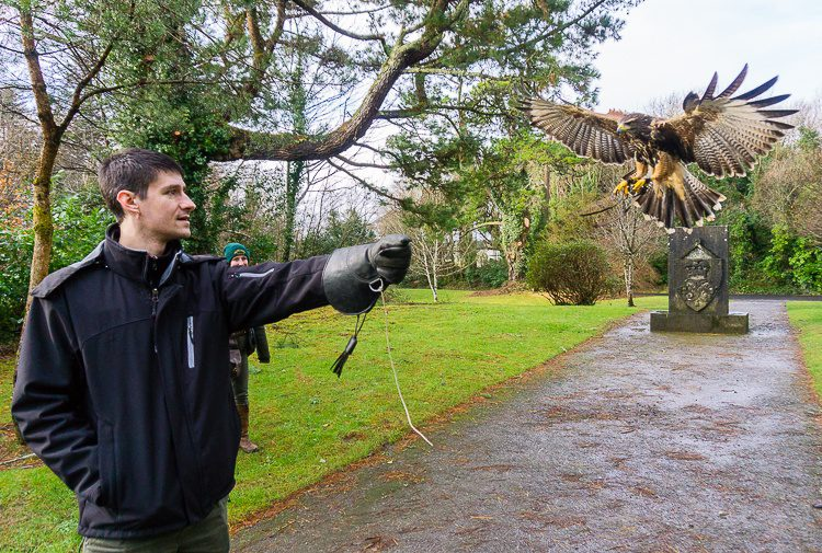 Colin was a pro at falconry!