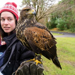 Giant Birds Landing on Your Hand to Eat Mice in Ireland