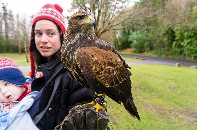 Giant bird of prey on my hand!