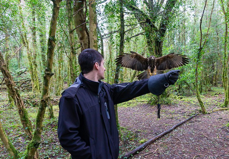 Doing falconry in the woods was magical.