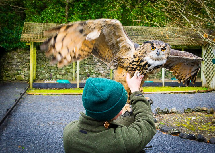 Look at that owl's wingspan!