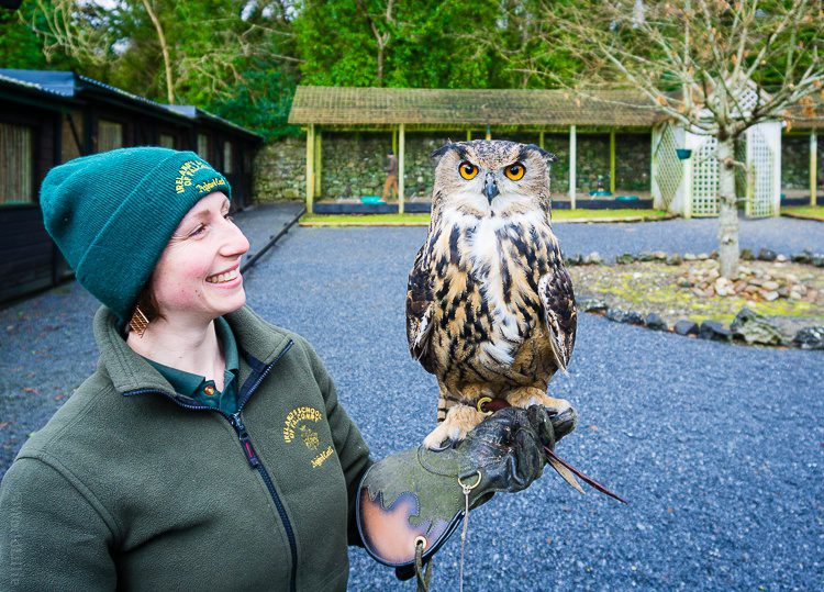 Our fearless falconry guide with a gorgeous owl.