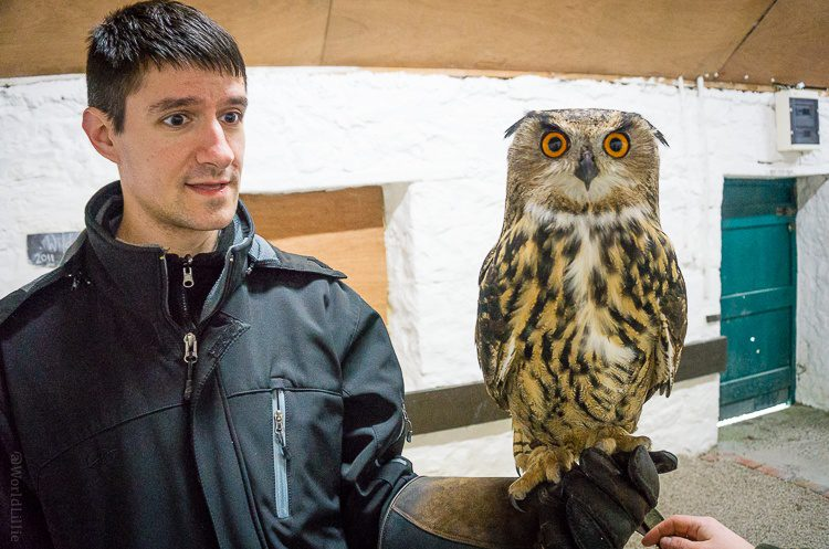 Colin was obsessed with the owl, and rightly so.