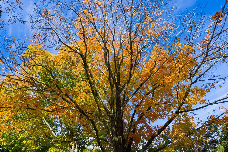 Ahh, autumn in New England!