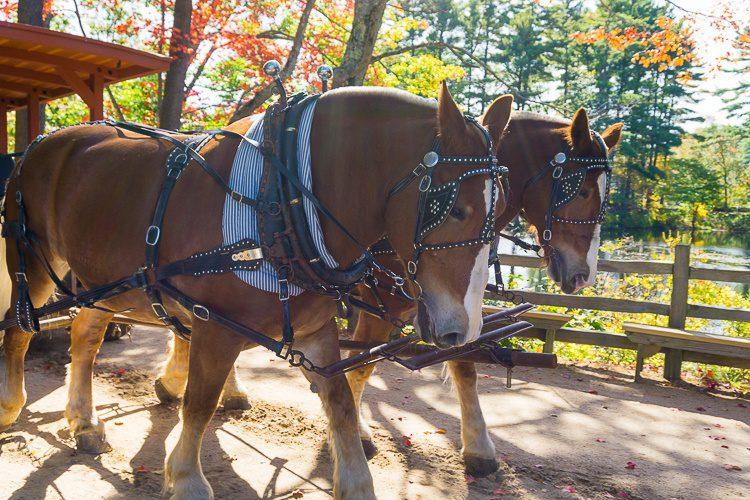 Sturbridge Village buggy ride with the horses