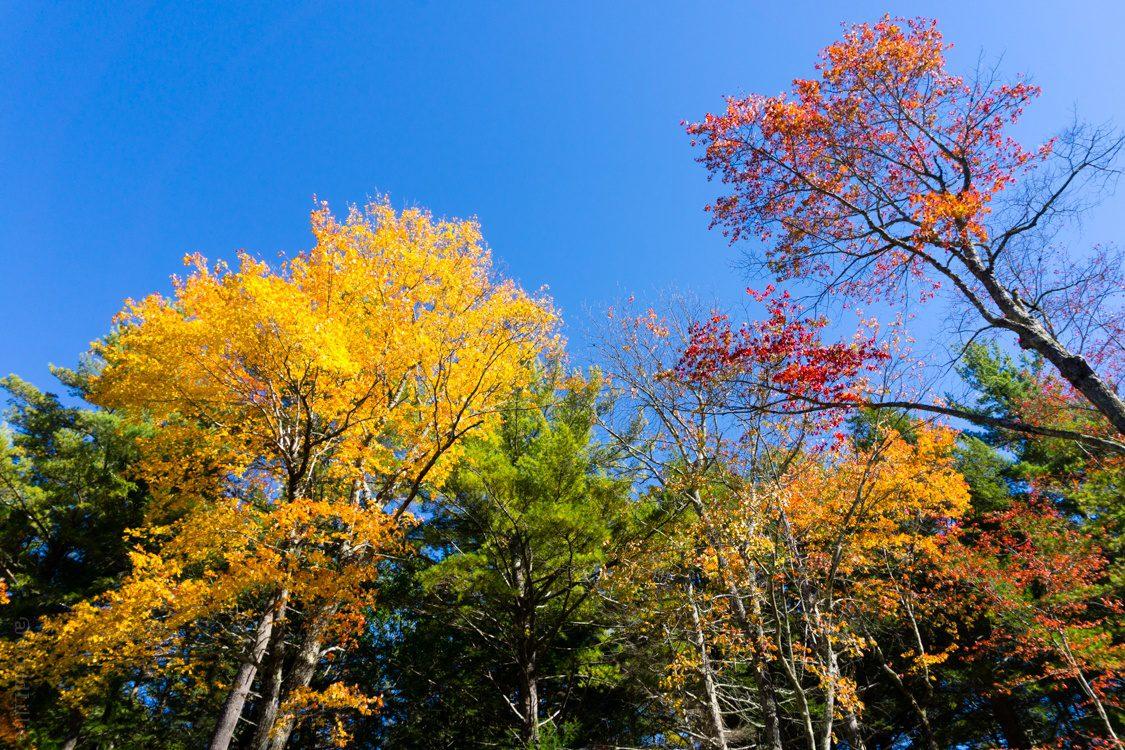 Happy autumn colors in Bigelow Hollow.