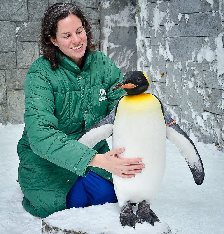 I have fallen in love with penguin cuddles.