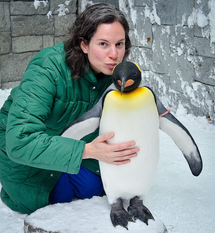 Is it safe for a pregnant lady to kiss a penguin?