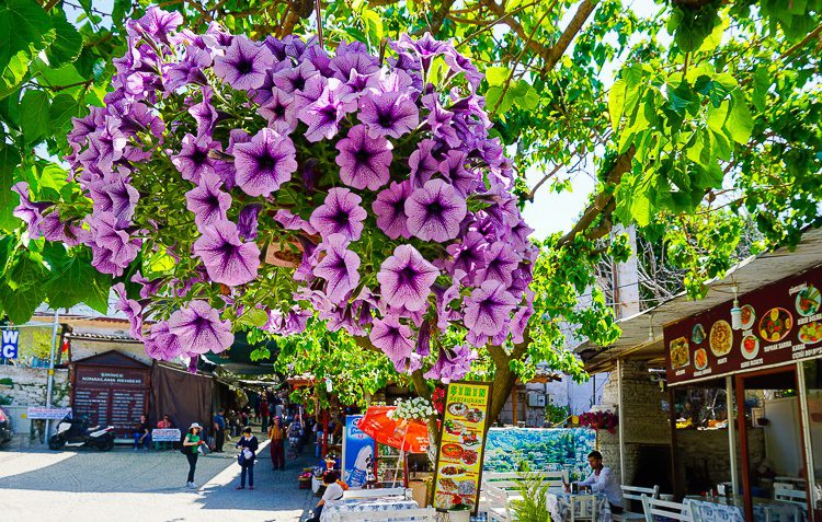 Flowers and foliage abound in the outdoor market.