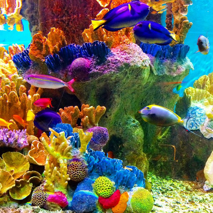 Colorful fish at the New England Aquarium.
