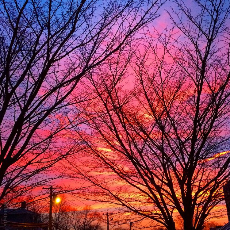 Another view of the wonderful pink and purple sunrise in Boston this week.