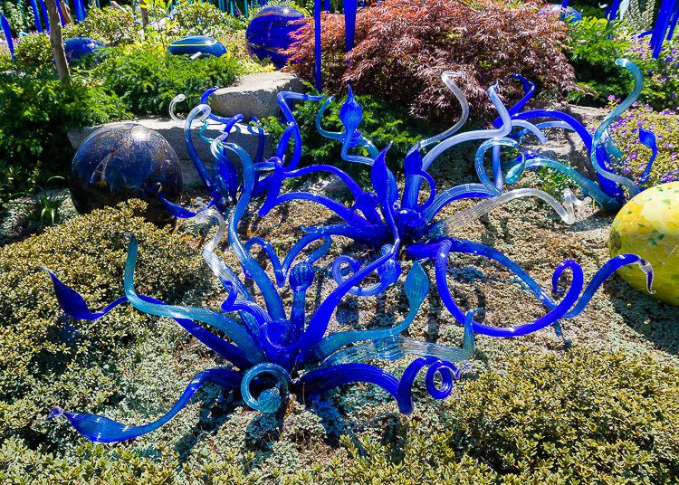 Chihuly garden: Blue glass snakes!