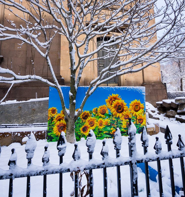 Sunflower art on Boylston Street.