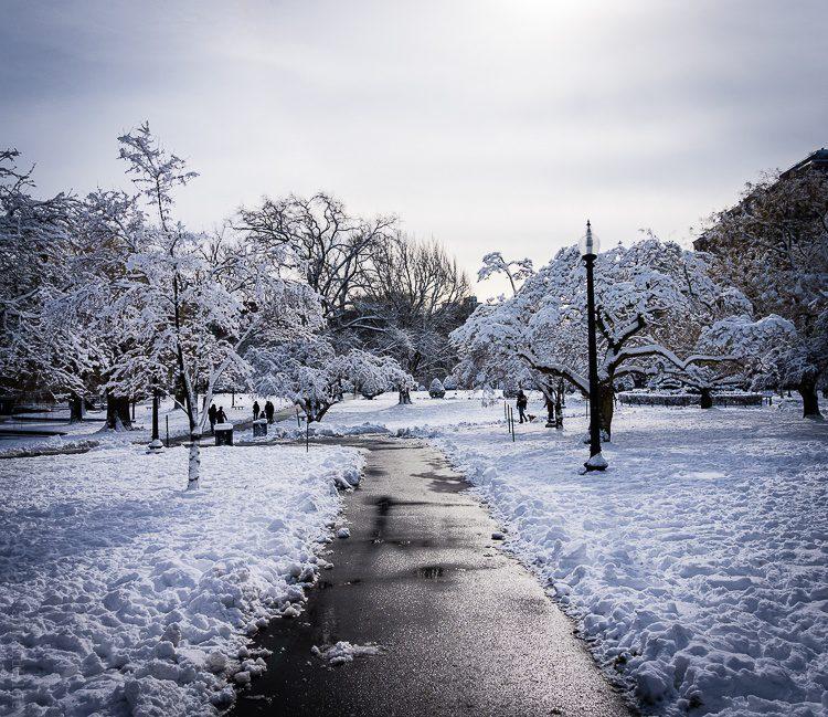 A walkway in Boston's Public Garden.