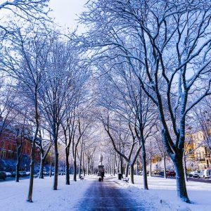 Boston Winter: Beautiful Photos and Travel Advice
