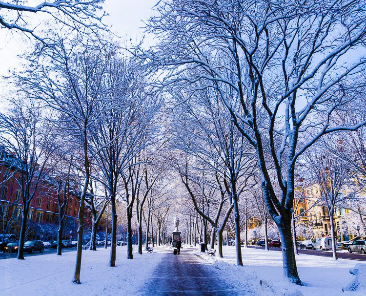 A great place to see winter in Boston is Commonwealth Avenue!