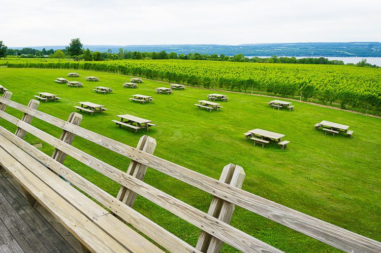 Isn't Wagner Vineyards a stunning place to wander?