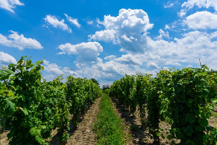 A dreamy vineyard in the Finger Lakes: Dr. Konstantin Frank's.