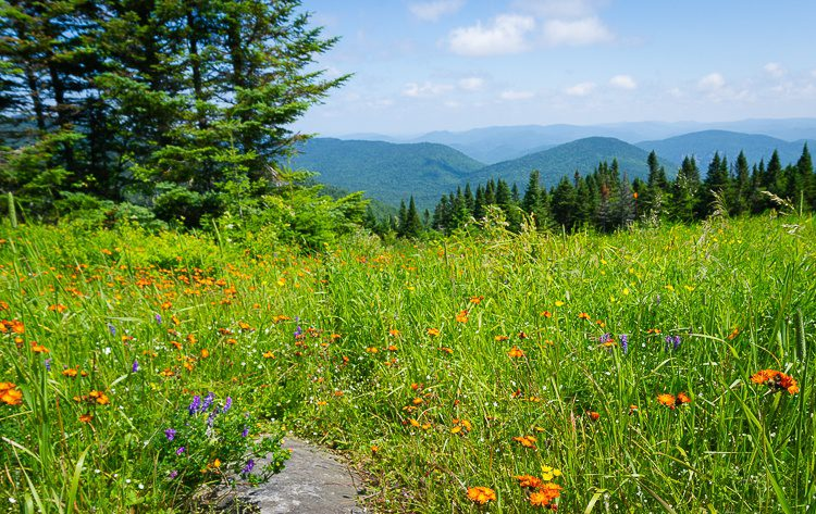 Wildflowers greet you at the top of Mont Tremblant!