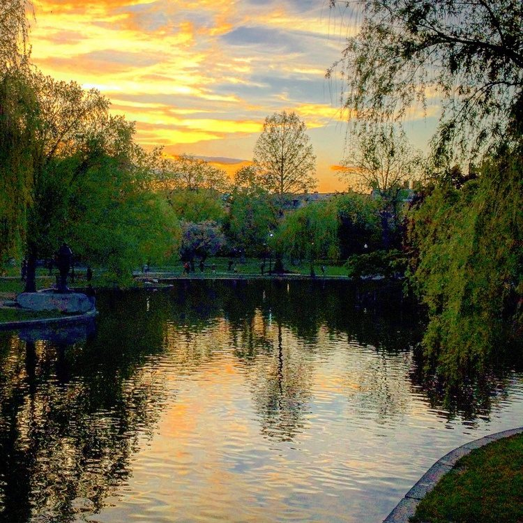 The Boston Public Garden looks as serene as I felt, oblivious to the earnings I was losing!