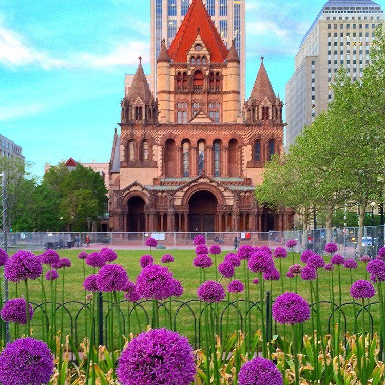 Flowers growing in Copley Square, Boston, like my growing understanding.