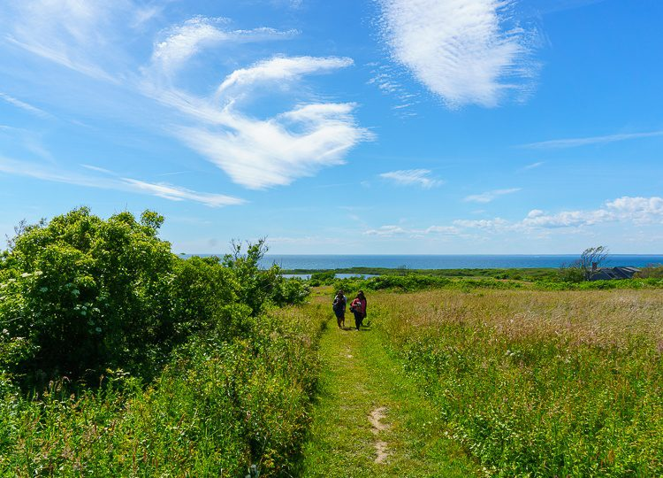 The embrace of nature at Block Island's Hodge Preserve.