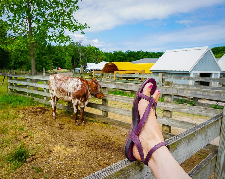 Side view of Sophia sandals in front, cow in back.