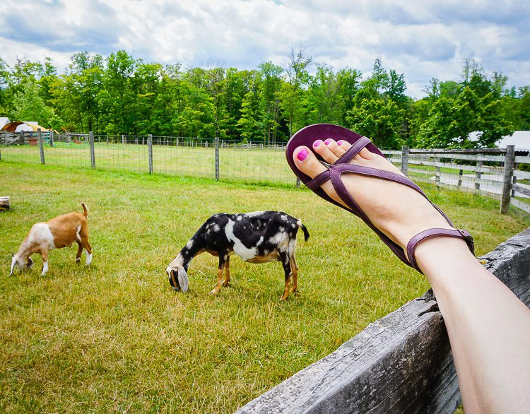Sofia leather Chaco sandals in front of goats.