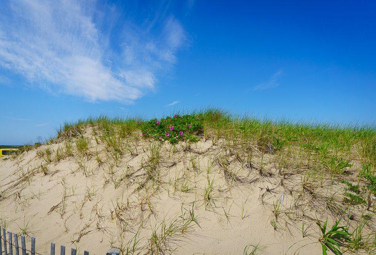 Provincetown beaches cape cod