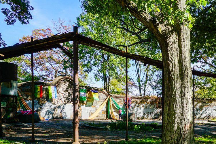 Bear Dens in Franklin Park