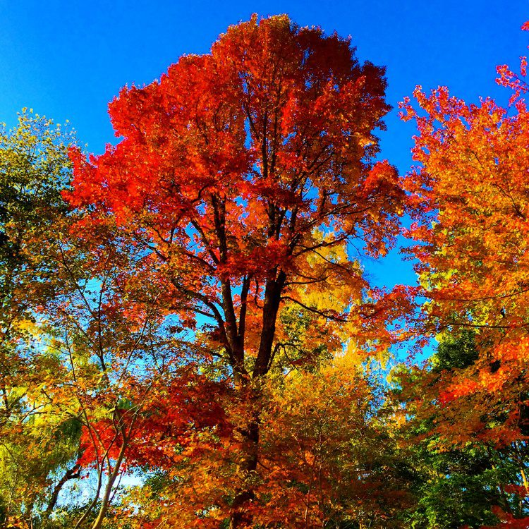 This spot is perfect to see the autumn glory of New England.