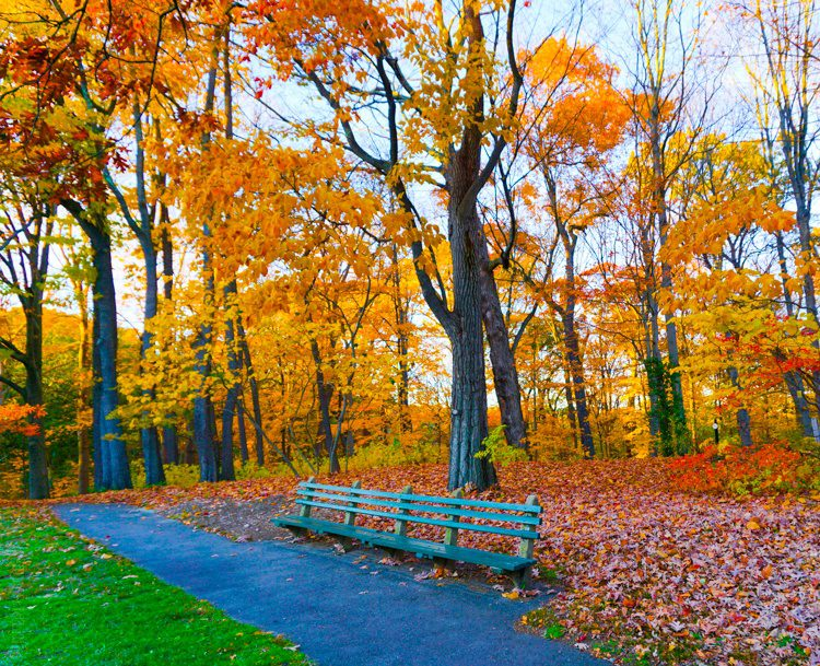The bench beckons you.
