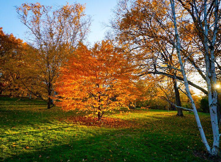 A golden orb of autumn illuminated by the sun.