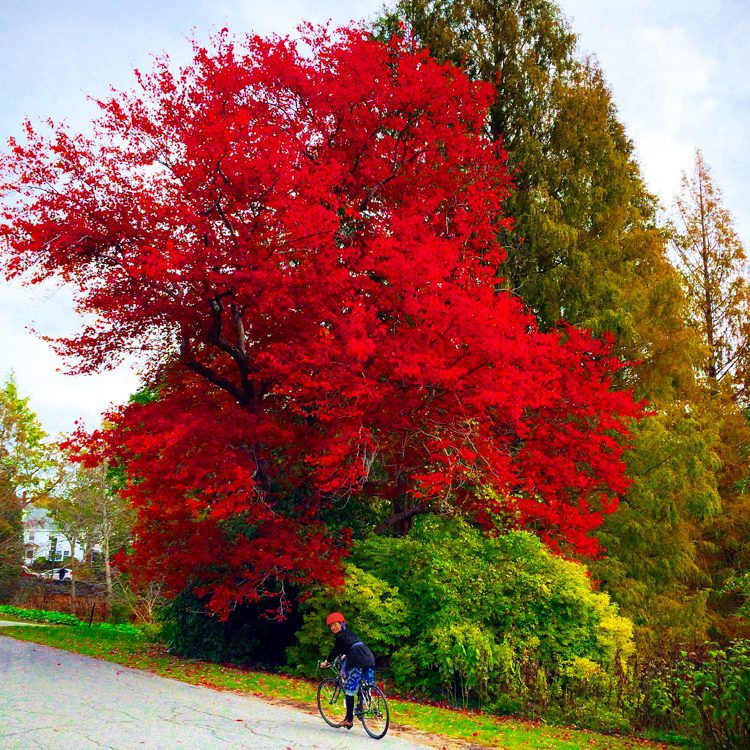 Boom: Bright red tree.