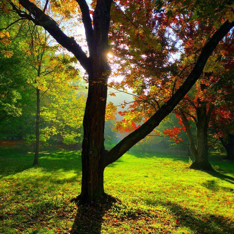 The Arnold Arboretum invites you to visit soon!