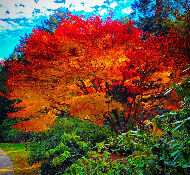 Luminous trees like stained glass.
