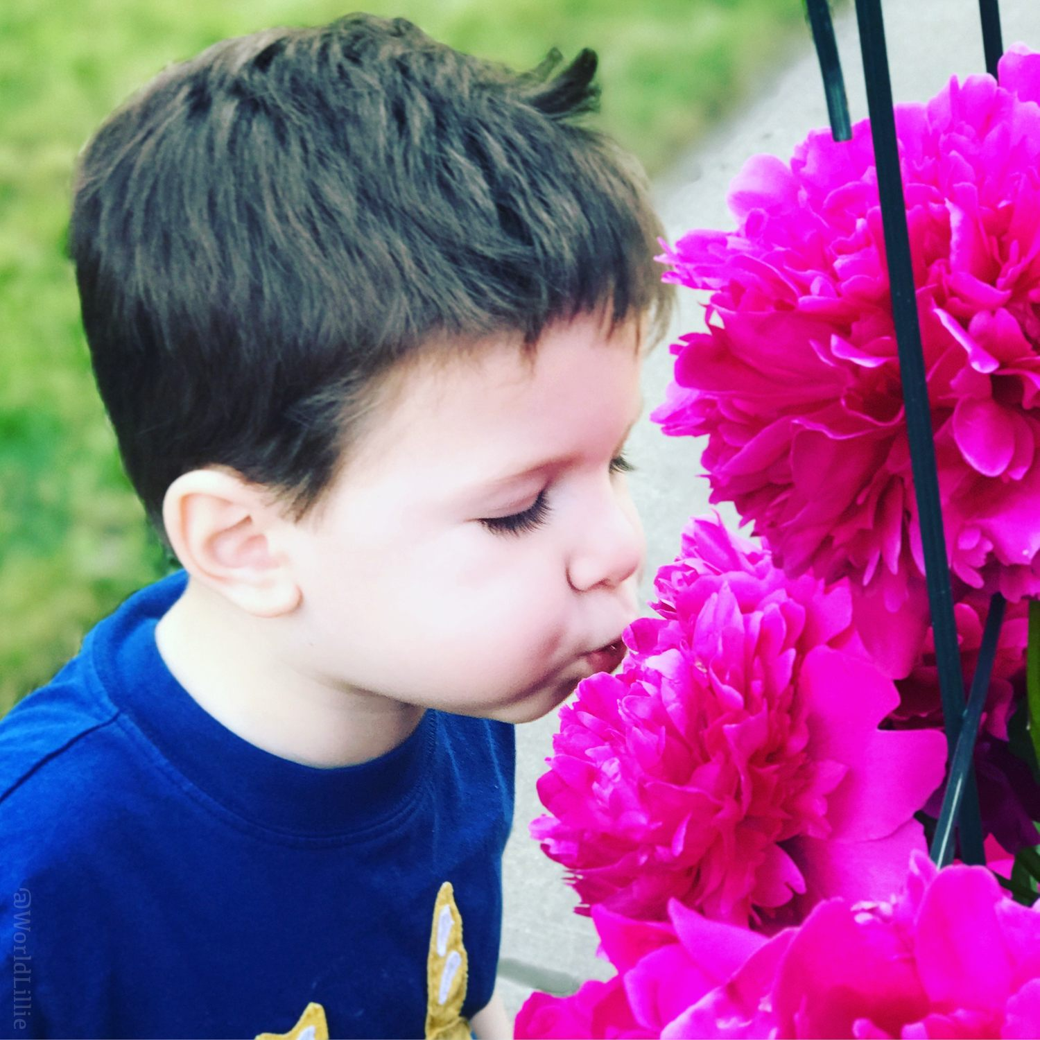Kissing the flowers.