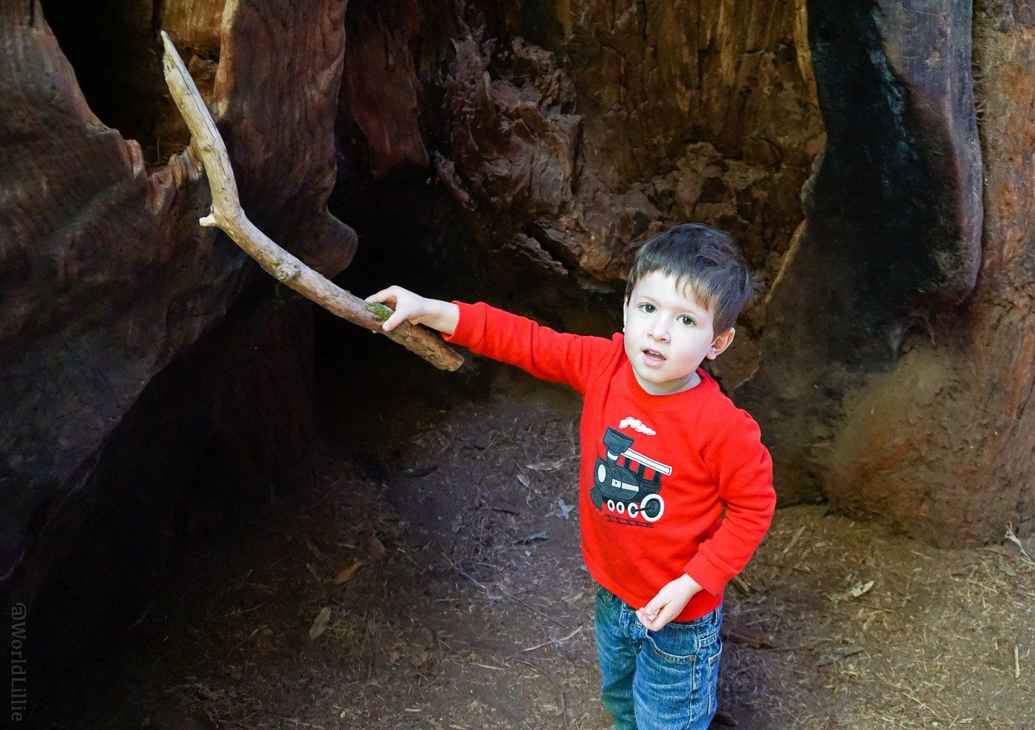 Inside a tree, poking it with a stick.