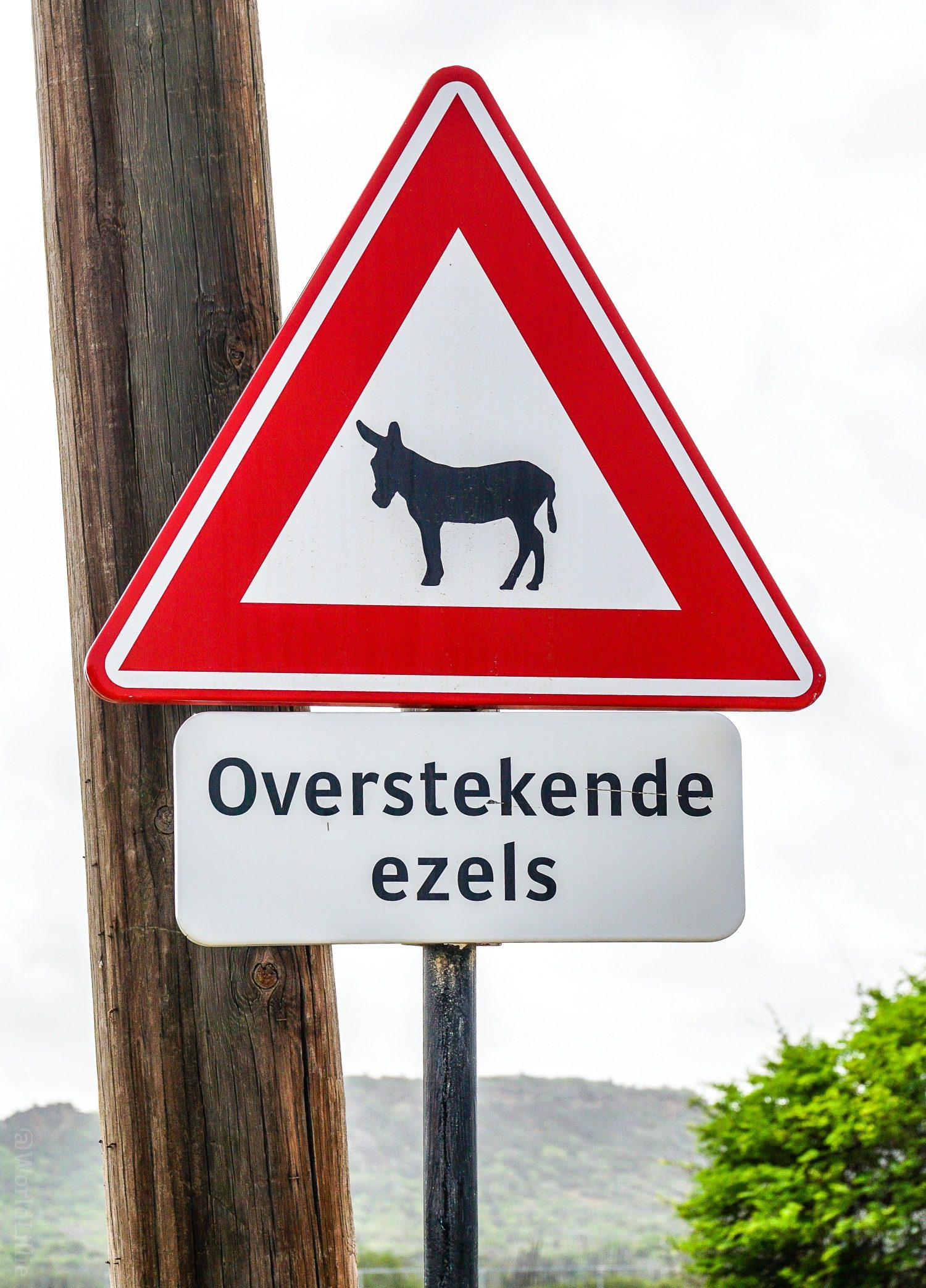 Dutch donkey crossing: Overstekende ezels. This shows the Dutch influence in the Caribbean island of Bonaire.